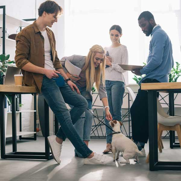 Pets in the Office Promotes Productivity