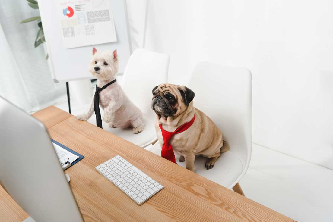 Pets in the Office and Productivity